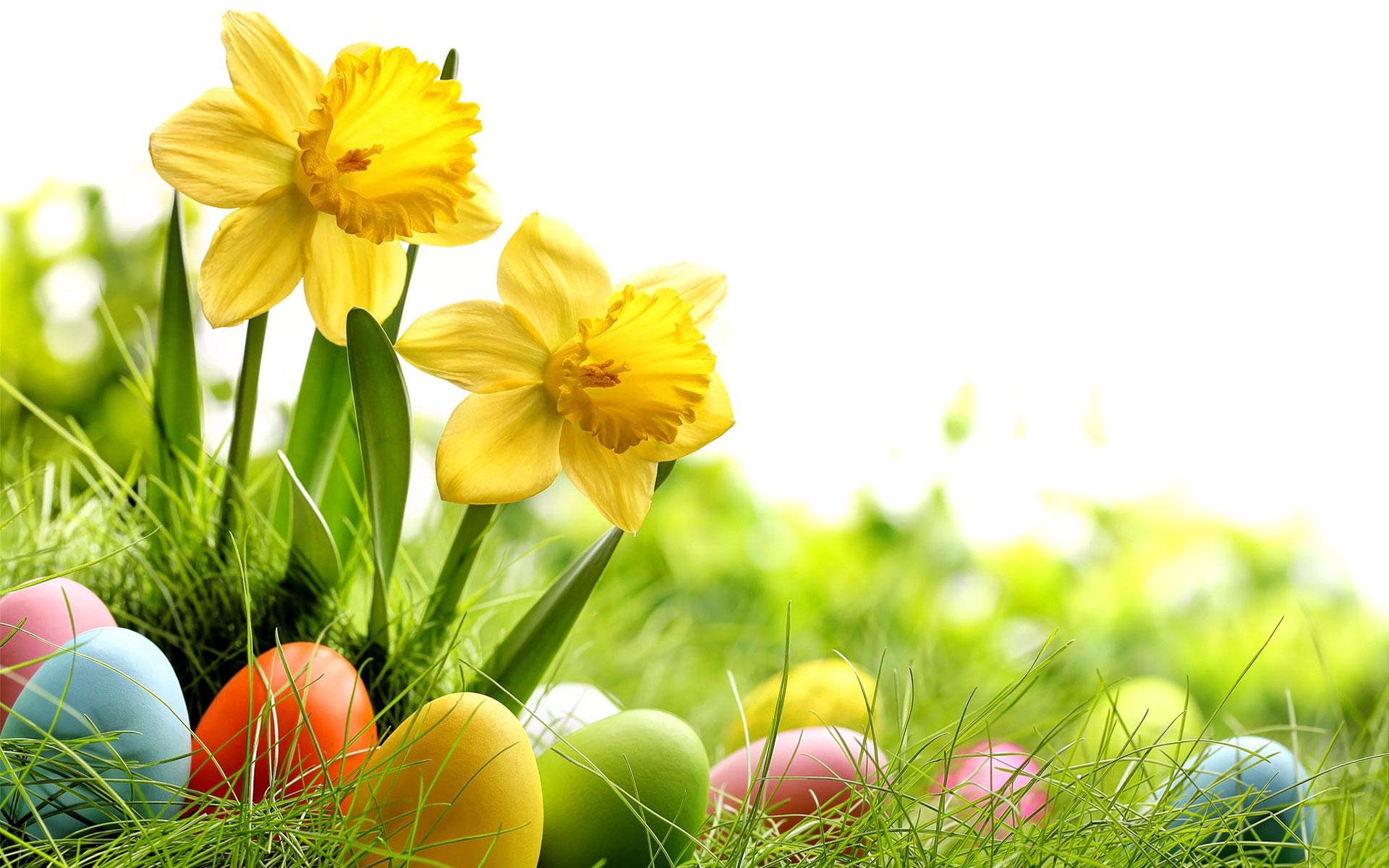 Háttérképek: Húsvét, Húsvéti tojás, nyuszi / Aniel wallpapers